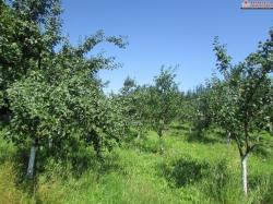 Zemljište sa voćnjakom u Zoviku